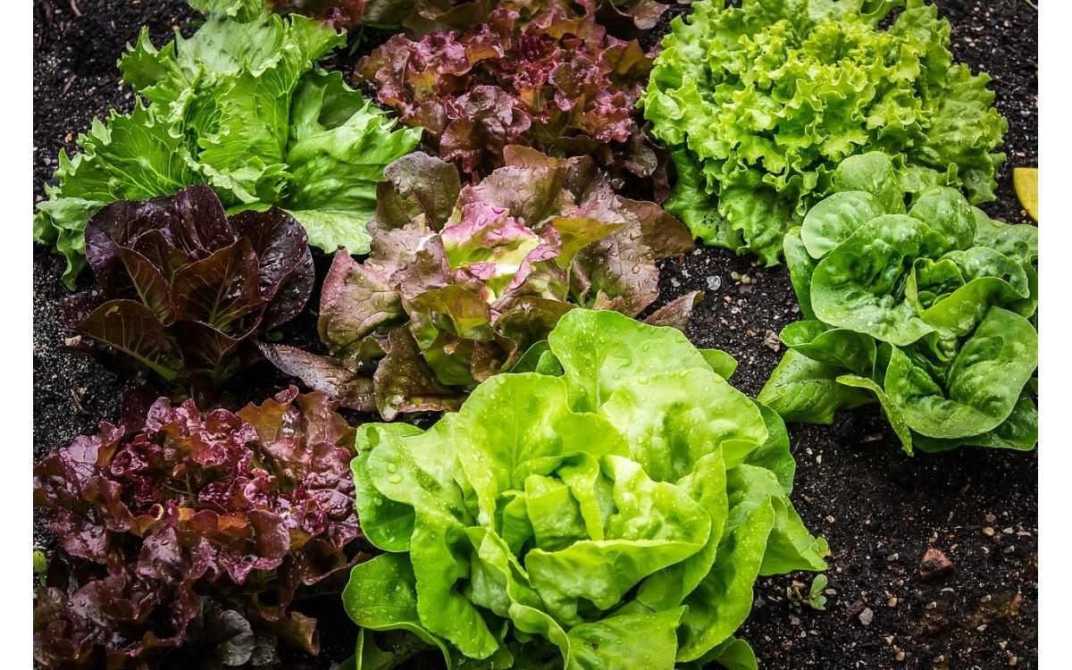 φτιάξετε τον δικό σας οικιακό λαχανόκηπο
