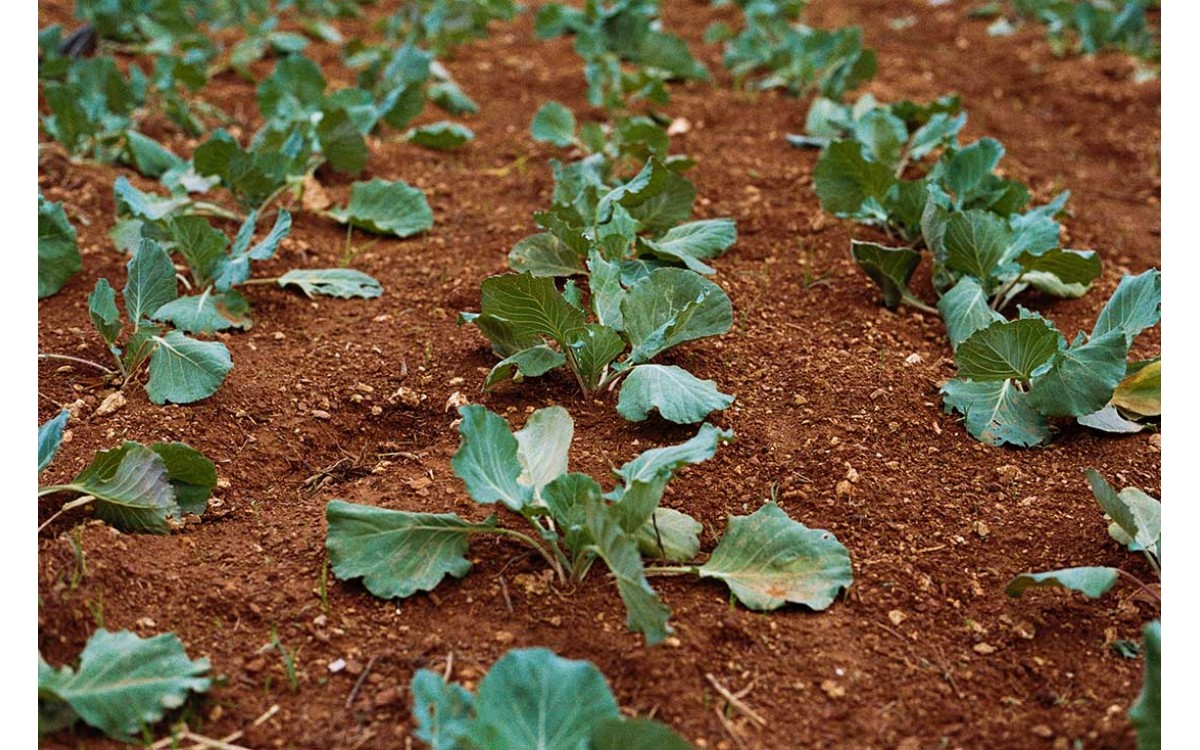Λίπανση εδάφους: Εμπλουτίστε τα φυτά σας με θρεπτικά στοιχεία