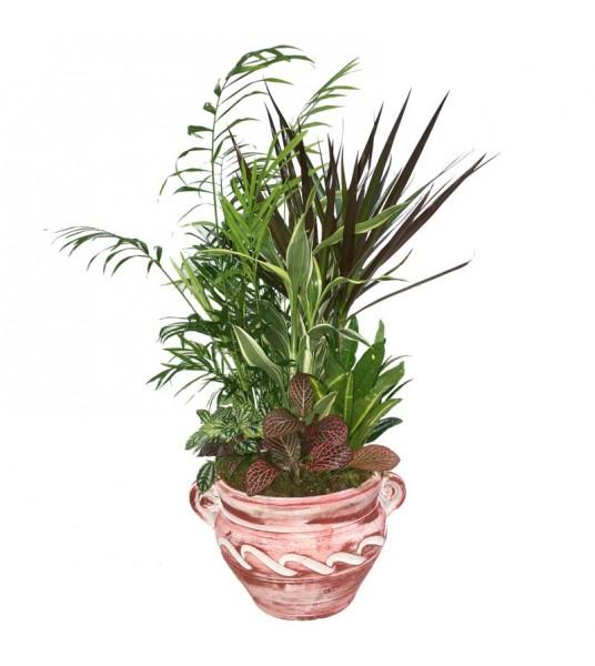 Σύνθεση φυτών σε πήλινο κασπώ με πολύχρωμα φυτά.