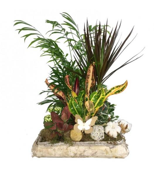 Σύνθεση φυτών σε ξύλινο κασπώ με πολύχρωμα φυτά.