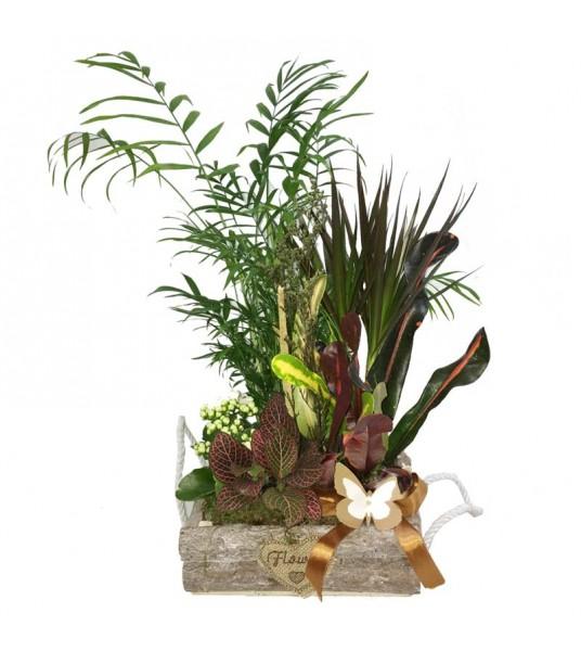 Σύνθεση φυτών σε ξύλινο κασπώ-ζαρντινιέρας με πολύχρωμα φυτά.