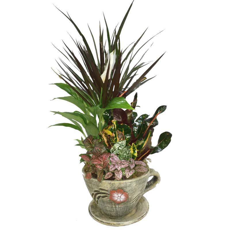 Σύνθεση φυτών σε πήλινο κασπώ-φλιτζάνι με πολύχρωμα φυτά.