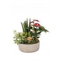Σύνθεση τροπικών φυτών σε τσιμεντένιο κασπώ